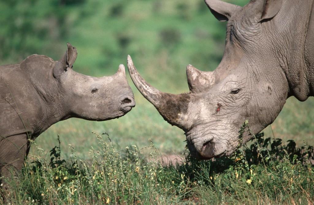 """""""STOP Tráfico de Especies"""", una campaña de WWF"""