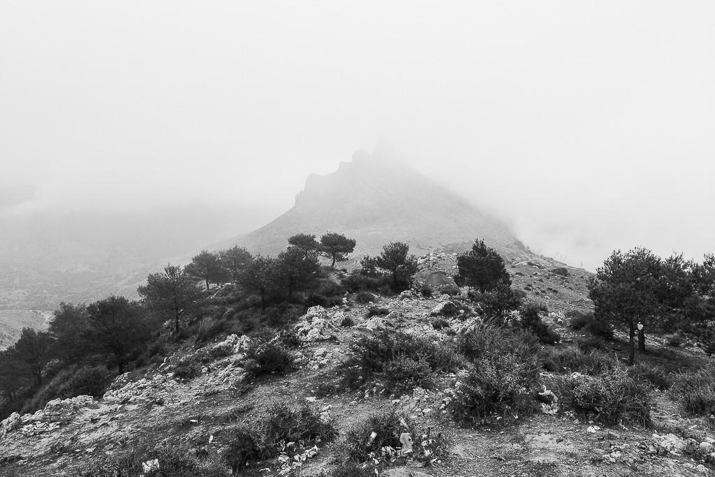 El monte que está antes de la valla
