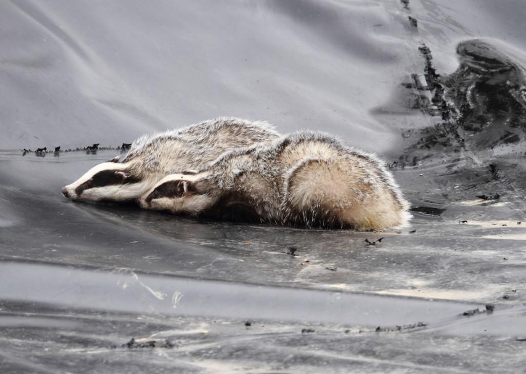 Sostenibilidad alerta del peligro de las balsas de agua forradas de plástico para la fauna silvestre