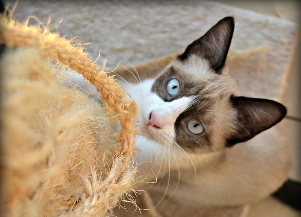 Proyecto Gato Teruel organiza una jornada de adopción felina este sábado