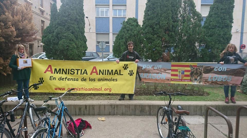 26.803 firmas para proteger a los lobos de Aragón