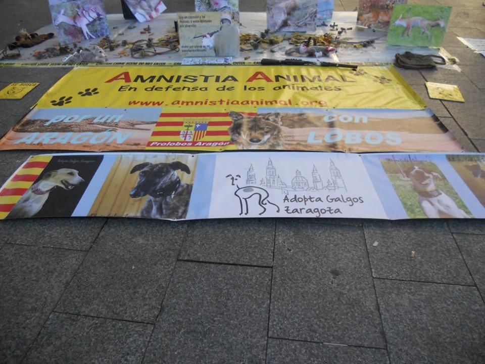 Amnistía Animal convoca diversos actos en Zaragoza para concienciar sobre los derechos de los animales