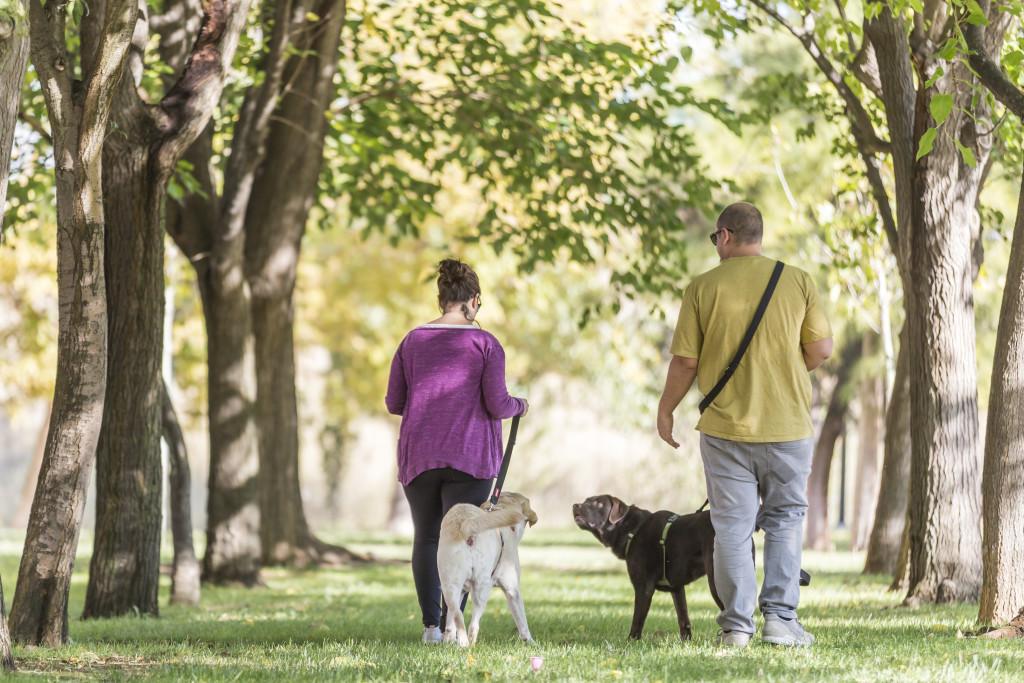 Zuera pone en marcha una iniciativa para mejorar la convivencia entre las personas y los animales, el Proyecto CanVivencia