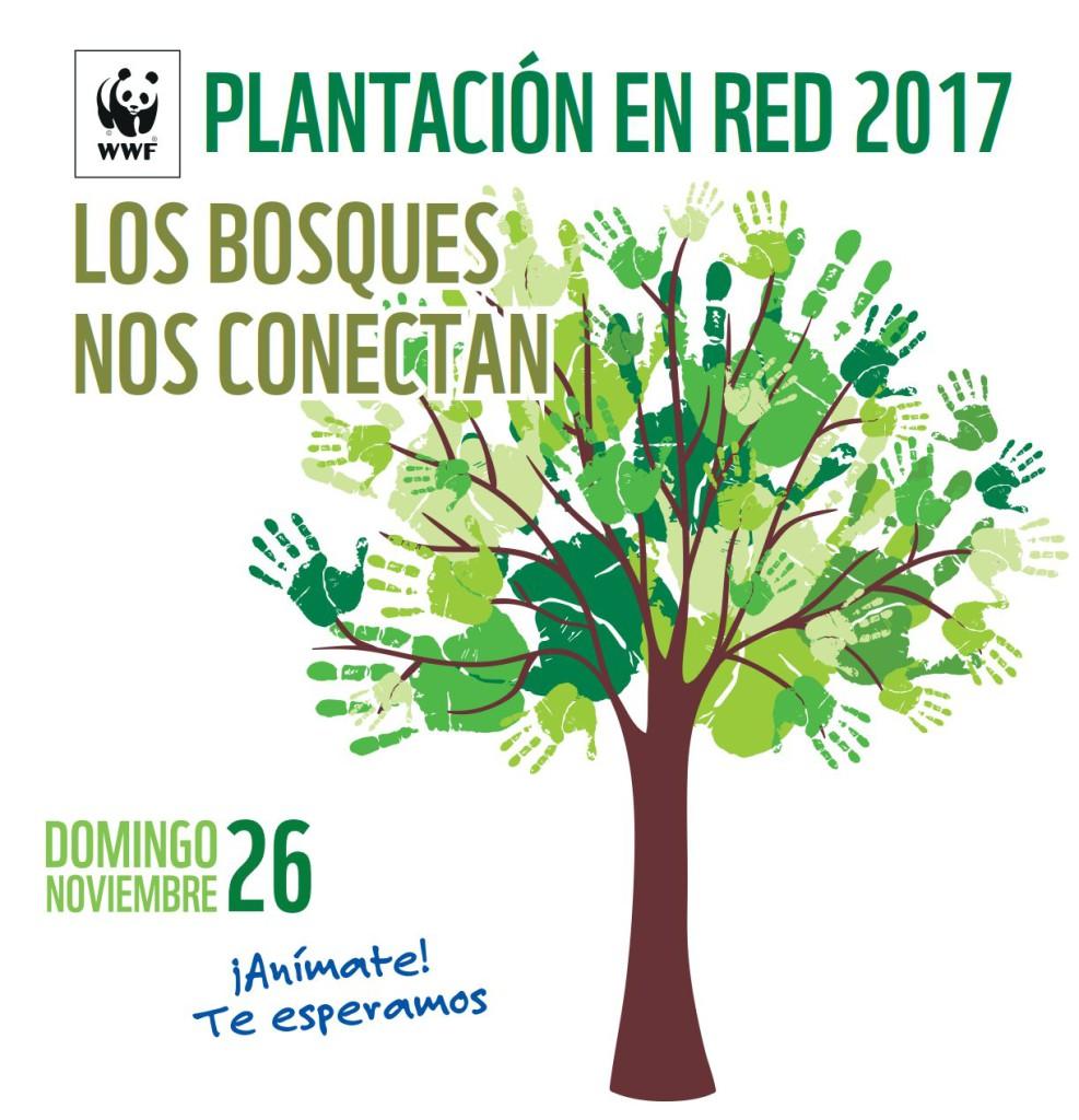 WWF Plantación en red