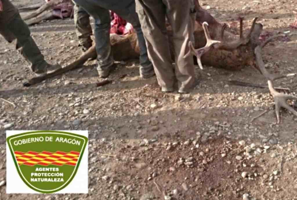 Agentes Forestales detectan irregularidades en una batida de caza en Belver d'a Cinca