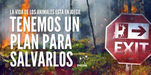 PACMA presentará al Gobierno de Aragón el Plan de Evacuación de Animales en Catástrofes
