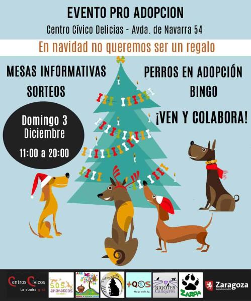 Foto: SOS Animalicos Zaragoza
