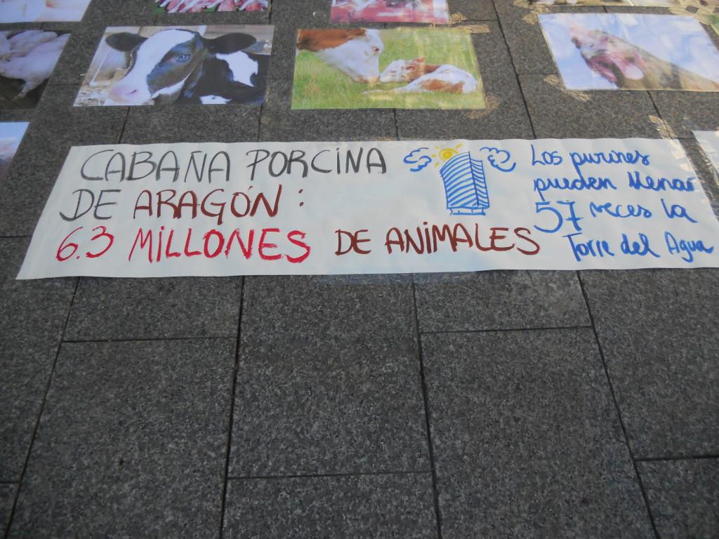Amnistía Animal denuncia el sufrimiento y las condiciones de vida que padecen millones de animales