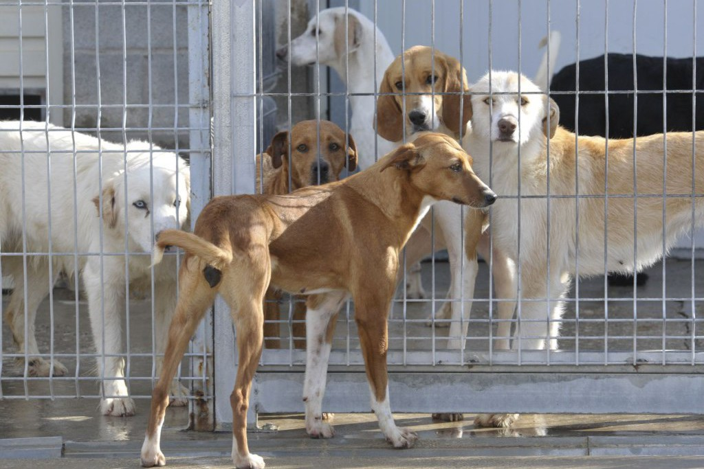 Más de 300 perros del Centro de Recogida de la DPH han encontrado casa en 2017