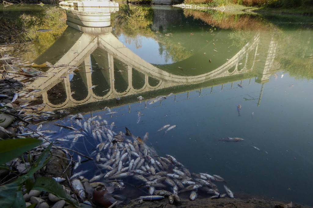El Gobierno español reconoce que todavía no sabe la autoría del vertido que ocasionó la muerte de miles de peces en el Cinca