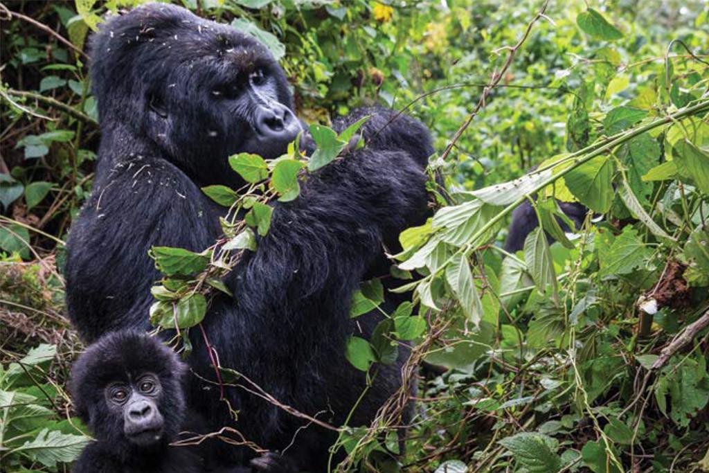 El cambio climático podría acabar en 2080 con la mitad de las especies de las regiones naturales más ricas del planeta