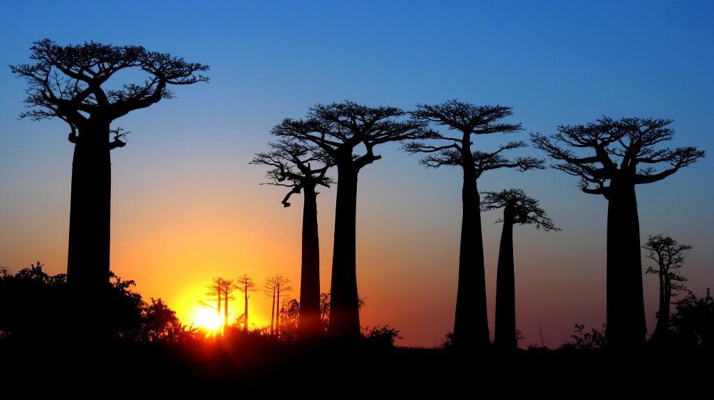 El Planetario de Aragón viaja a Madagascar y al cielo del hemisferio sur