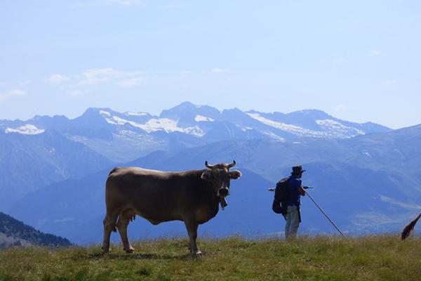 'Mincha d'aquí',  una estrategia para convertir el Alto Aragón en un territorio agroalimentario sostenible
