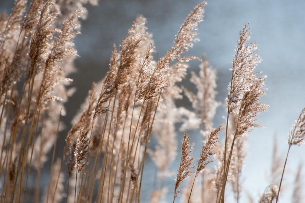 Comienza la difusión diaria de los niveles de polen en Zaragoza
