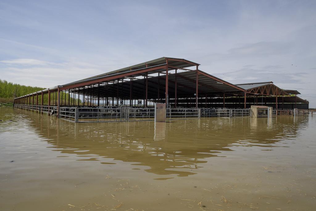 Un número indeterminado de animales mueren en granjas durante la crecida del río Ebro