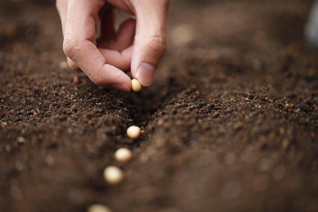 Aragón Hacia la Soberanía Alimentaria vuelve con sus jornadas dedicadas a los suelos fértiles
