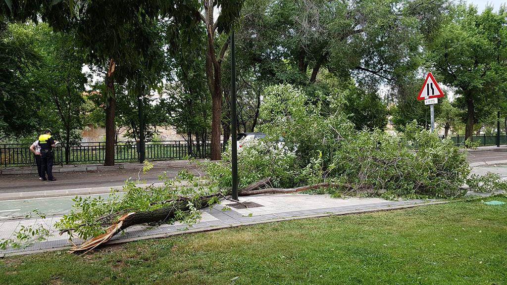 Una fuerte tormenta en Zaragoza provoca la caída de árboles, obliga a interrumpir el tranvía y a cortar calles