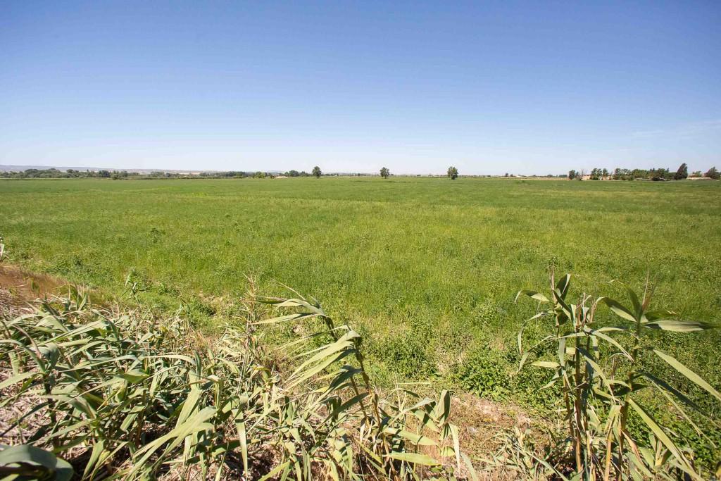 Abierto el plazo para presentar proyectos para el Parque Agroecológico de Movera