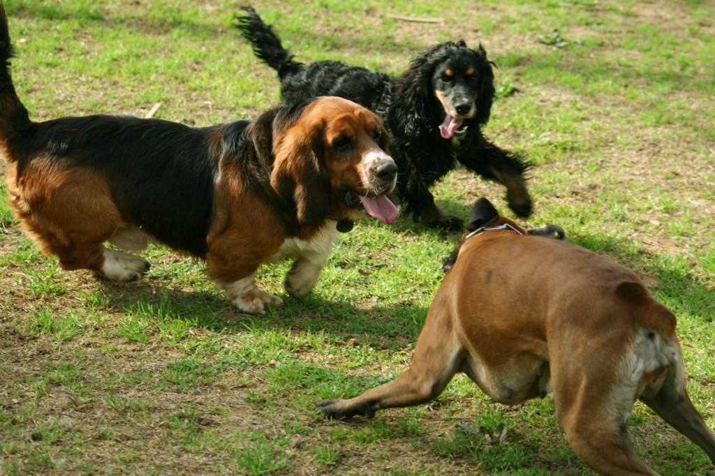 La mejora del único parque para perros en Teruel sale adelante gracias a la moción presentada por Ganar