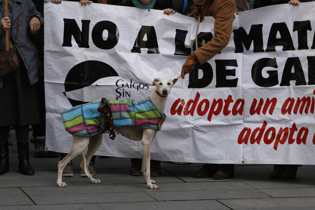 """Las manifestaciones """"No a la caza"""" ven crecer su apoyo y este año se celebran en más de 40 ciudades"""