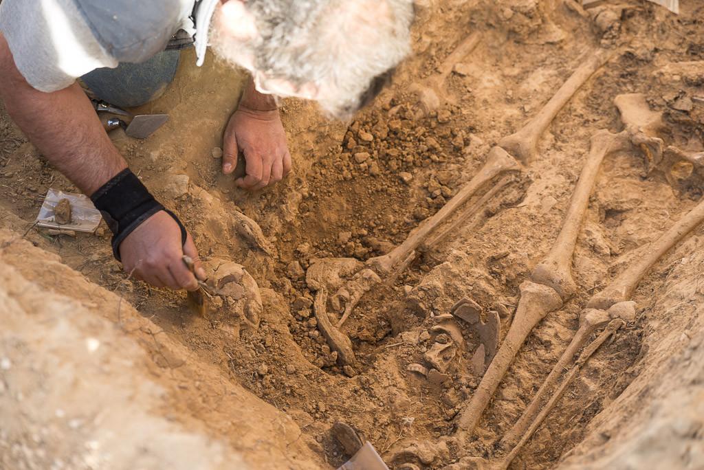 Javier Ruíz trabajando en la limpieza de restos óseos. Foto: Pablo Ibáñez.