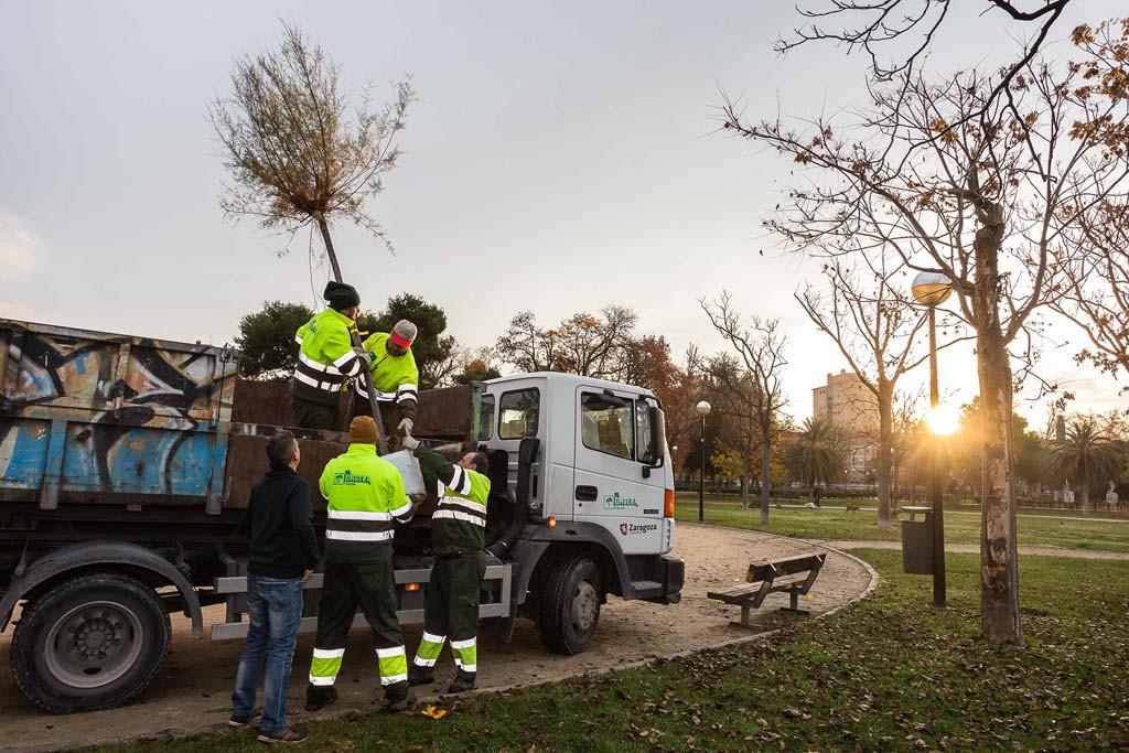 139 nuevos árboles de 20 especies distintas para el Parque del Tío Jorge de Zaragoza