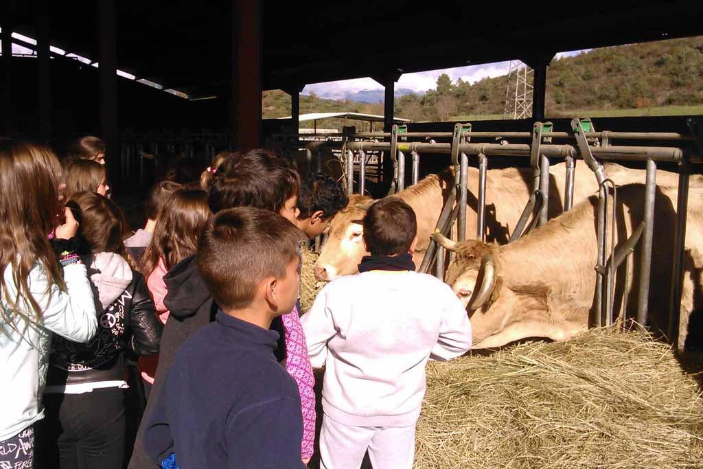 El comedor escolar ecológico de L'Aínsa, un aula más