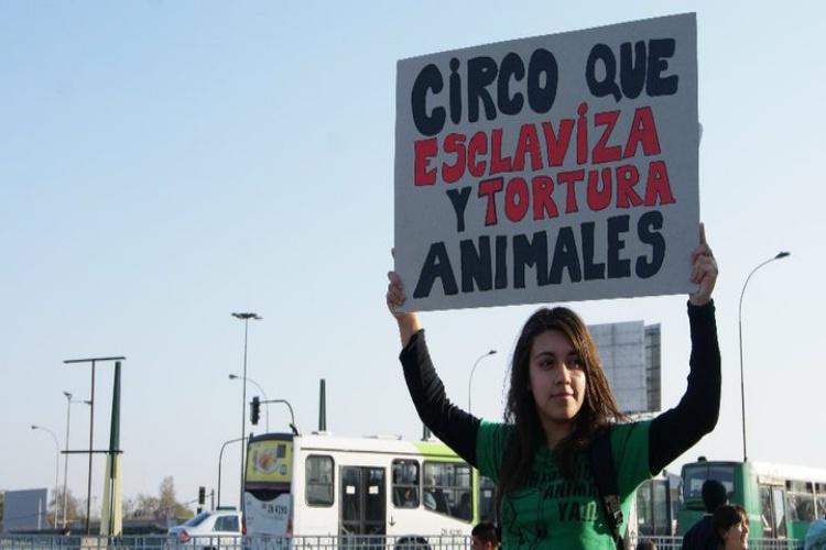 Asociaciones animalistas convocan una concentración en Zaragoza en rechazo a la instalación del circo con animales