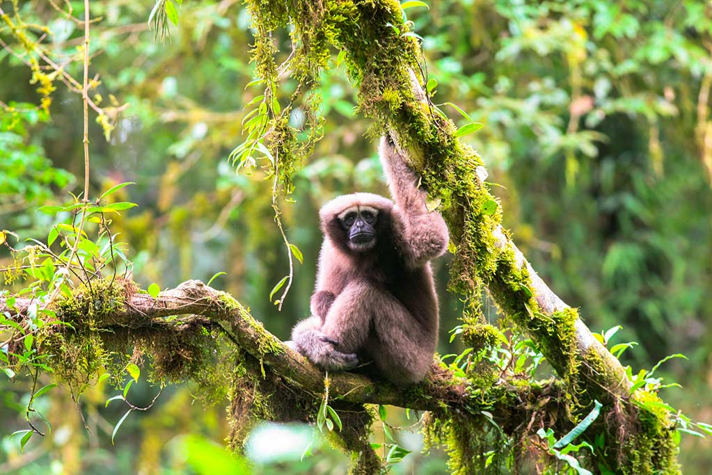 El gibón 'Skywalker', el murciélago 'Lance Bass' y un sapo de la 'Tierra Media' son tres de las 157 nuevas especies descubiertas en el Gran Mekong