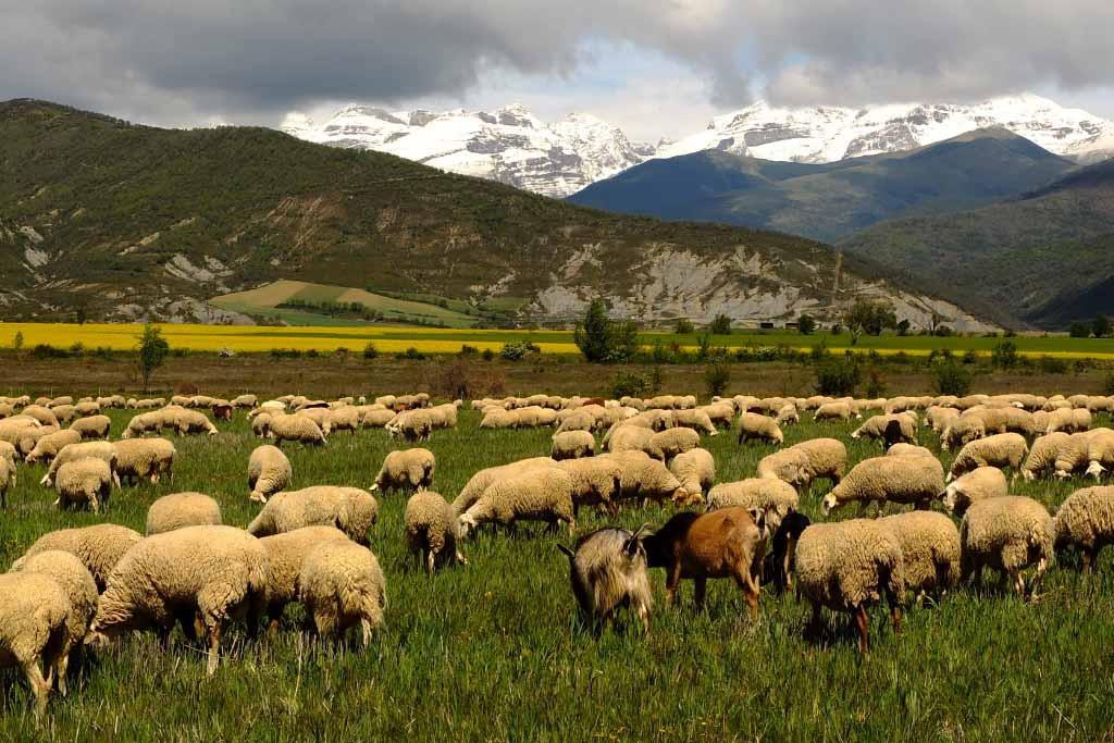 El CITA y la Universidad de Zaragoza diseñan un sistema de pagos por servicios ambientales para la agricultura y la ganadería mediterráneas