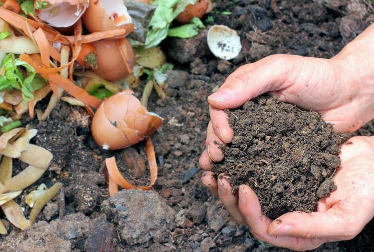CCOO Aragón pone en marcha el Proyecto 'Cero residuos Zaragoza' para reducir los residuos y promover el compostaje