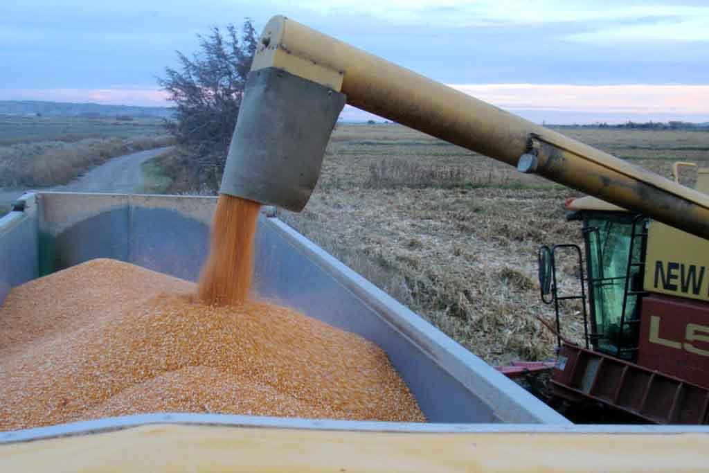 Subvenciones por valor de 930.000 euros en el ámbito de la innovación y formación del sector agroalimentario