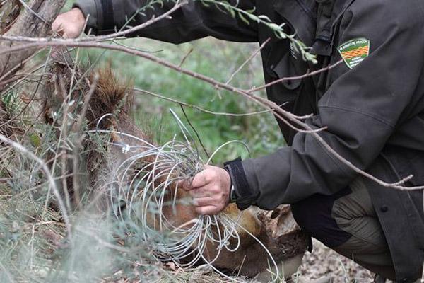 CSIF insiste en la necesidad de mejorar la seguridad de los agentes de protección de la naturaleza