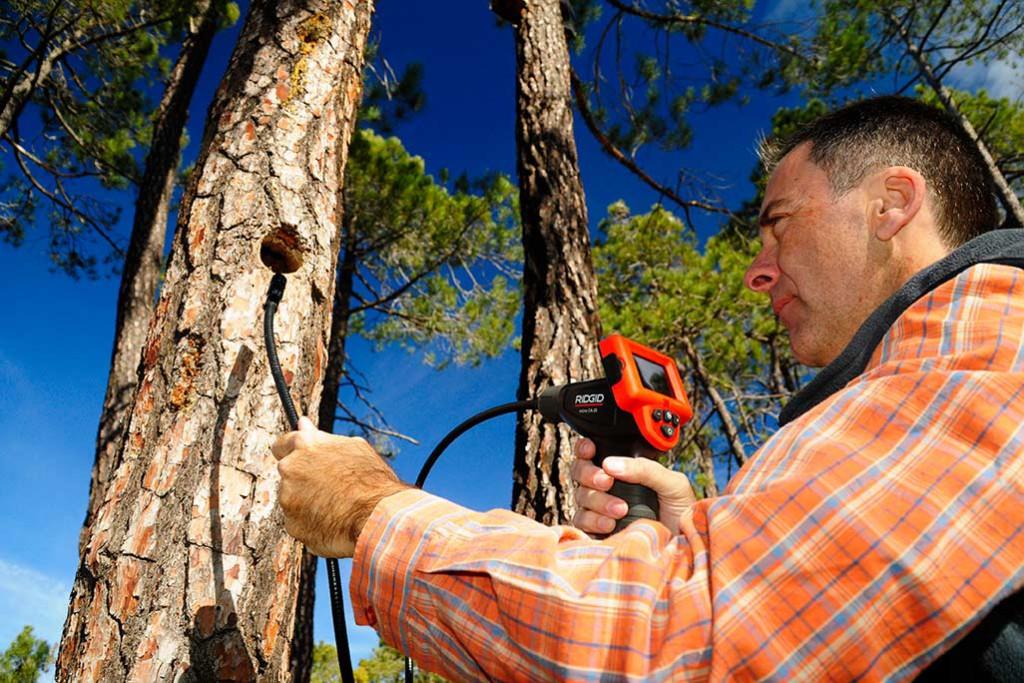 Un insecticida natural: veinte especies de murciélagos viven en los Pinares de Rodeno