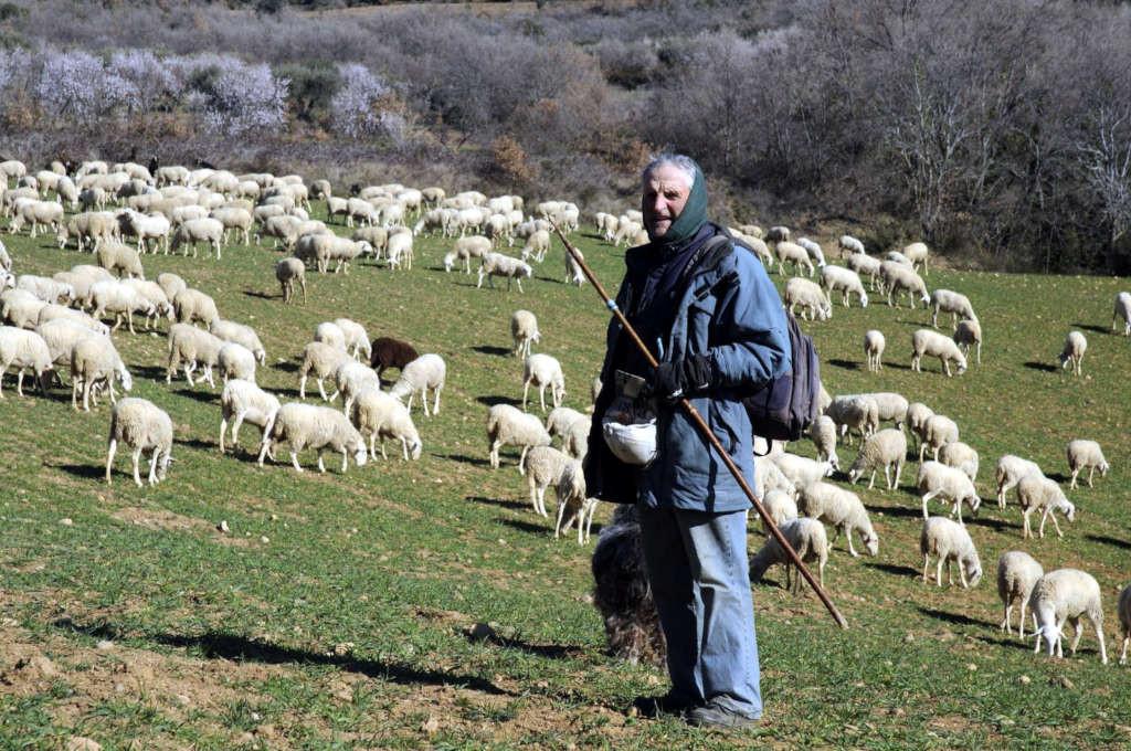 Antonio Aniés, el último pastor de Alquézar, será reconocido por la Asociación de Ganaderos de Guara