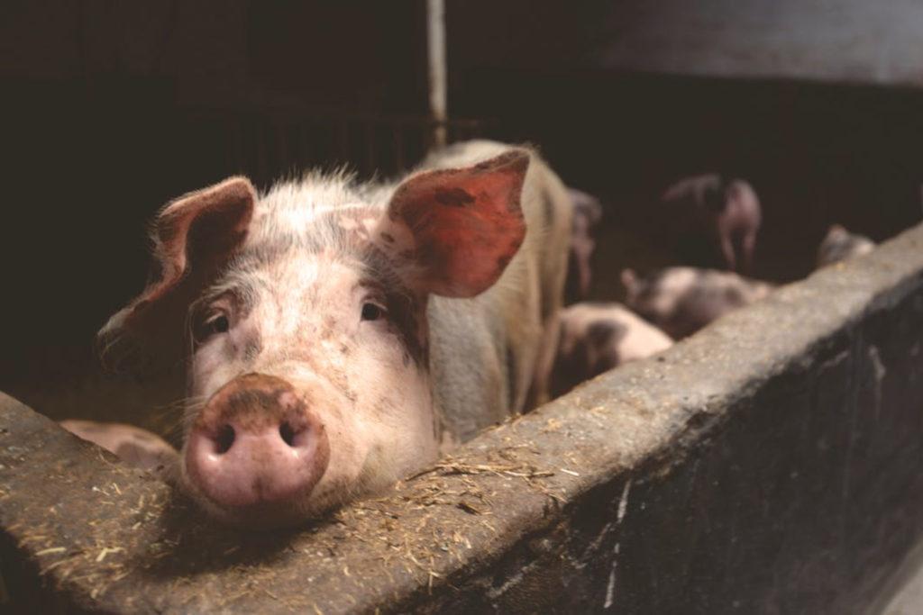 Alerta ambiental: dos granjas de cada tres contaminan los acuíferos