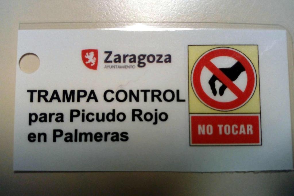 Zaragoza pone en práctica una técnica para luchar contra la plaga de picudo rojo en las palmeras