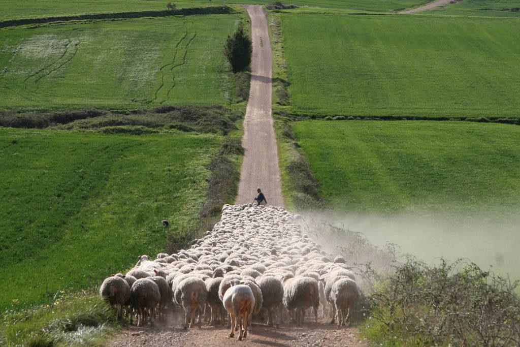 """UPA propone que la PAC """"premie"""" la labor medioambiental de la agricultura familiar"""