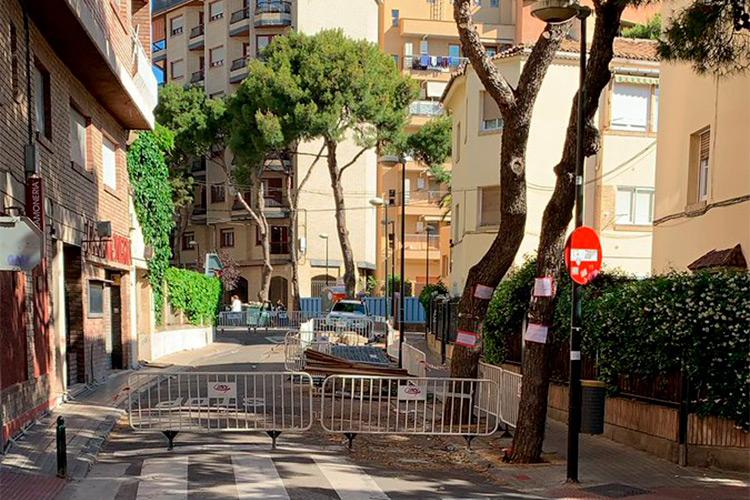 Solo tres árboles de los ochos árboles de la calle Bruno Solano eran potencialmente inestables