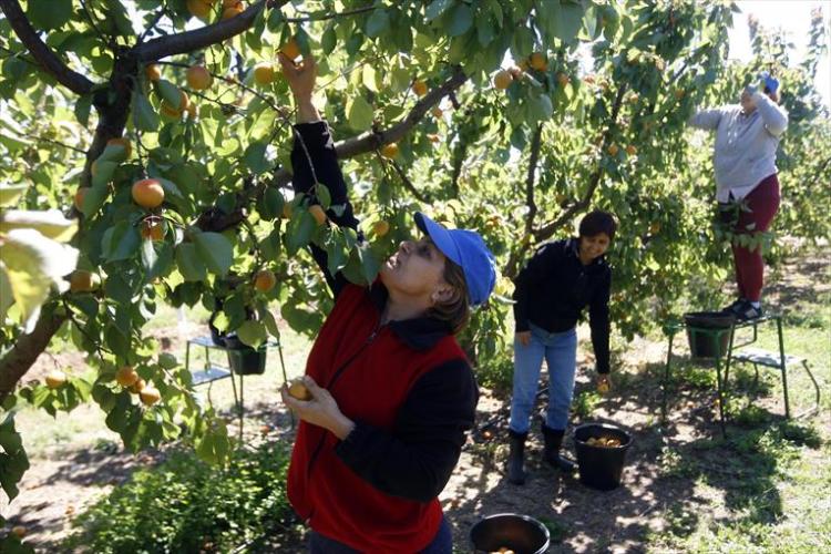 Alcanzado en el SAMA un principio de acuerdo para el convenio agropecuario de Uesca