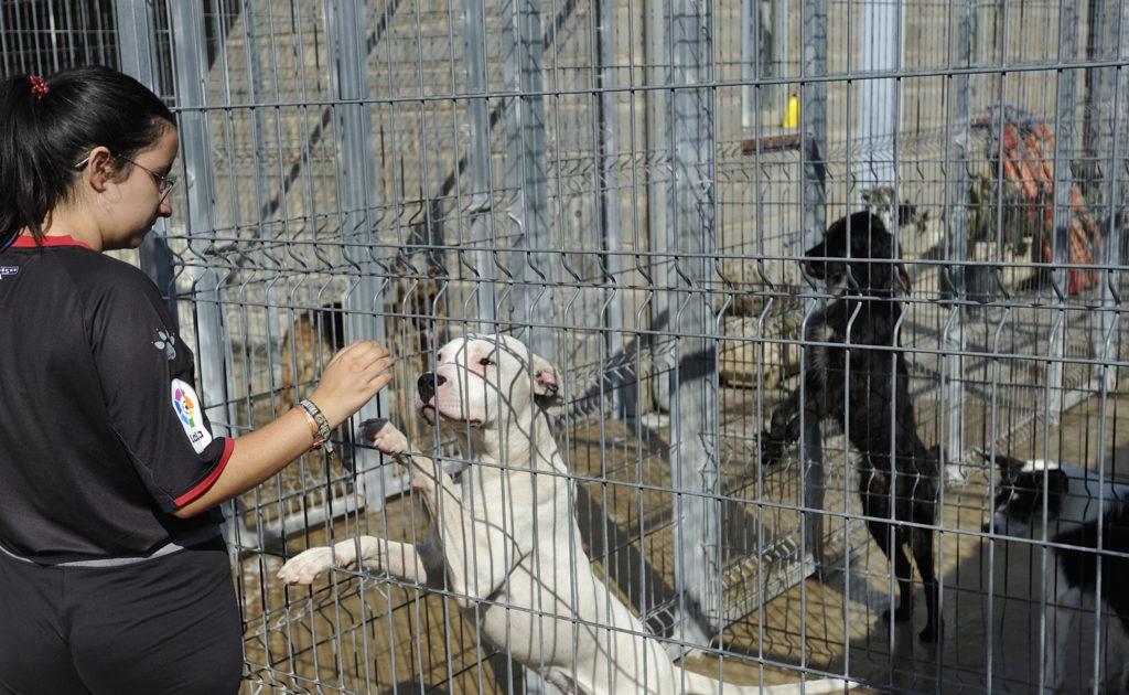 Ya son más de 200 perros los adoptados este año desde el Centro de Recogida de Animales de la DPH