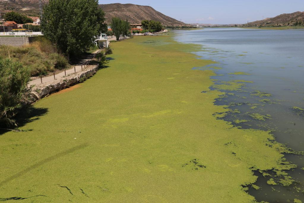 La organización del Descenso Internacional del Cinca delimitará carriles de paso para que los y las piragüistas eviten la acumulación de algas