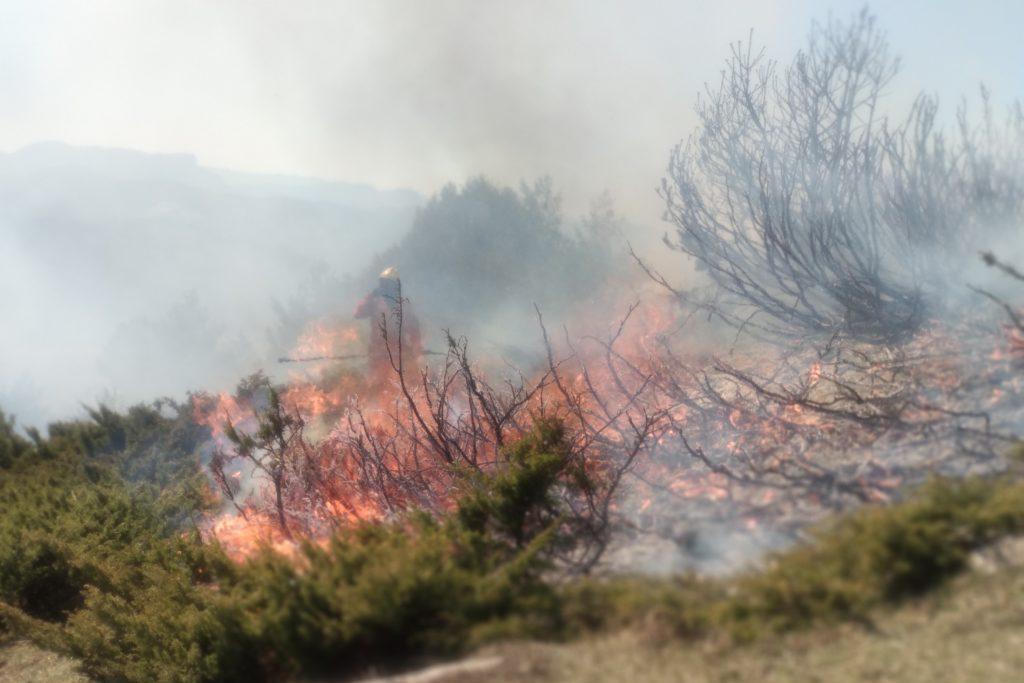 Sarga, la privatización de la gestión forestal en Aragón