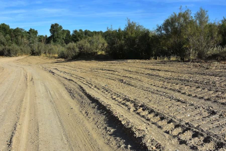 Ecologistas denuncian la eliminación de arbolado en el soto de Sobradiel