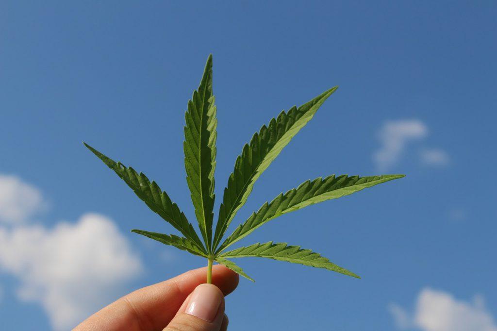 Las peores consecuencias de la Ley Mordaza las sufre la persona usuaria de cannabis