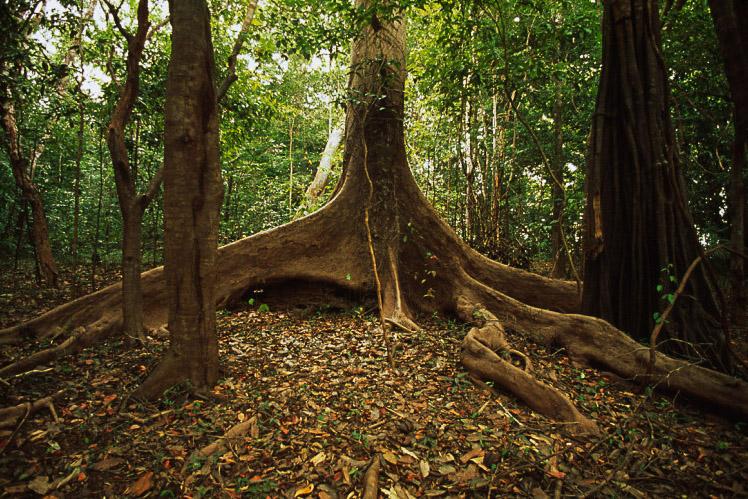 WWF denuncia la incesante deforestación a la que se enfrenta la Amazonia