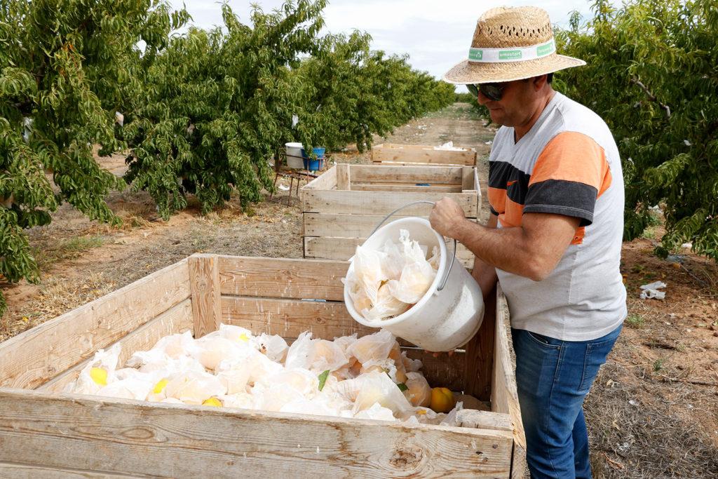 UPA denuncia en la semana de la feria Fruit Attraction la venta de fruta por debajo de los costes de producción