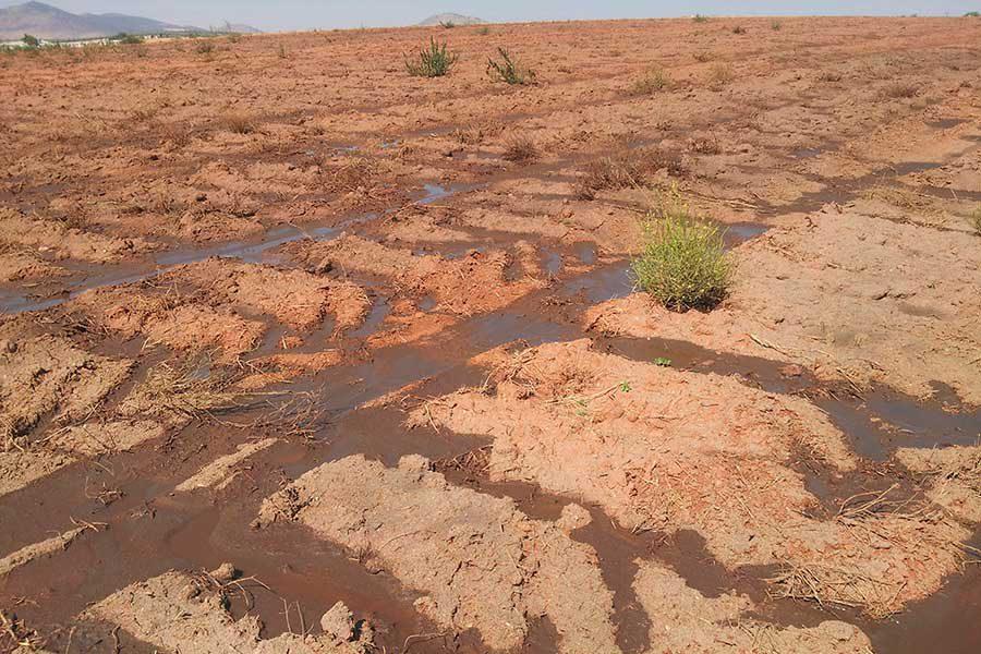 El coste ecológico de la ganadería intensiva se mide en metros cúbicos de purines
