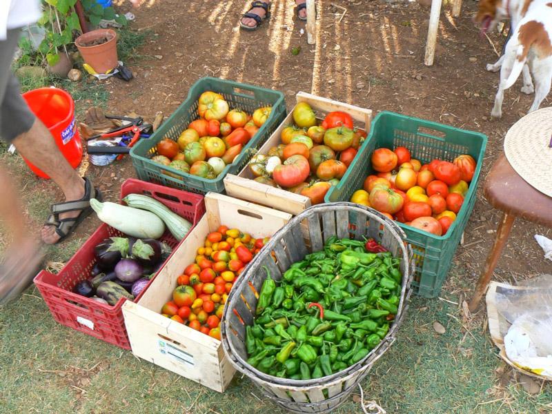 InDIEco impulsa la alimentación saludable, de calidad, sostenible y de proximidad