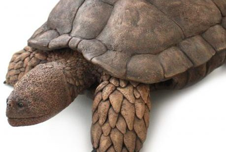 Aragochersis, una nueva tortuga del Cretácico Inferior